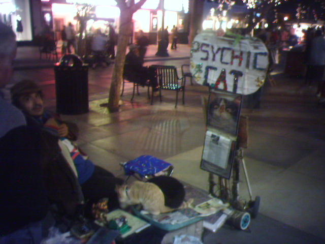 Psychic Cow Meet Psychic Cat At The Santa Monica Promenade